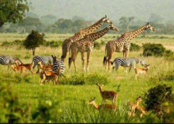 Visit In Uganda On Your Next Vacation - Uganda Tourism Centre